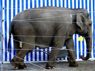 Elephant measure by marcokalmann