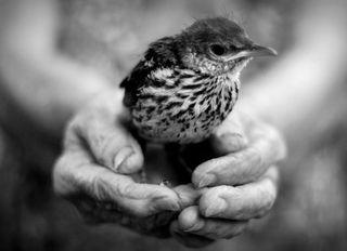 Old hands bird