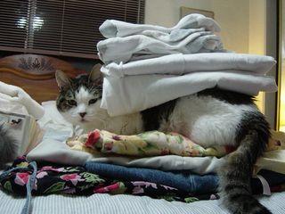 Laundry halper rberteig